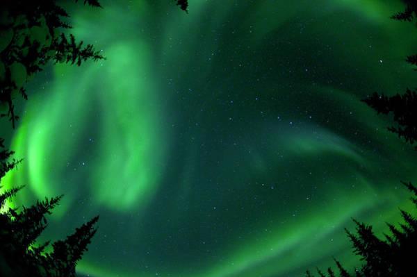Boreal Forest Photograph - Aurora Borealis Above Trees In The by Wayne R Bilenduke