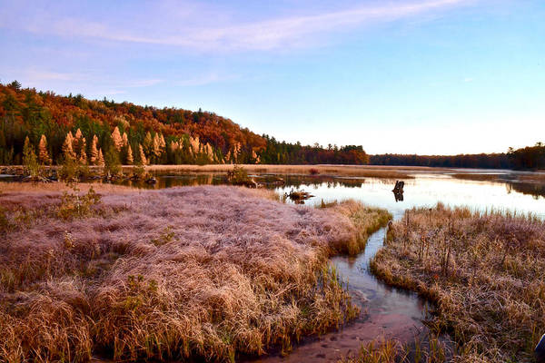 Manistee National Forest Wall Art - Photograph - Ausable River 9233 by Michael Peychich