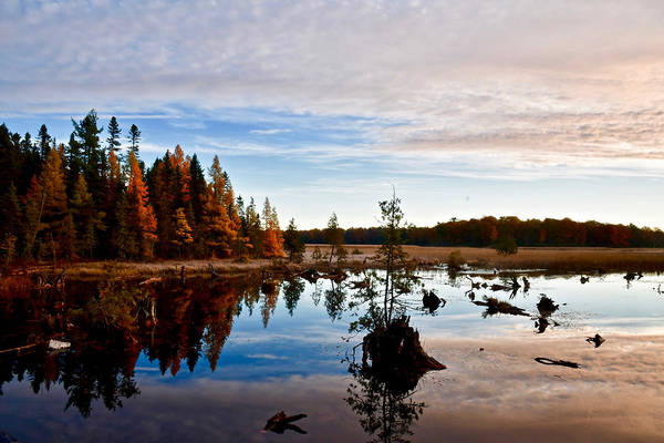 Manistee National Forest Wall Art - Photograph - Ausable River 9300 by Michael Peychich