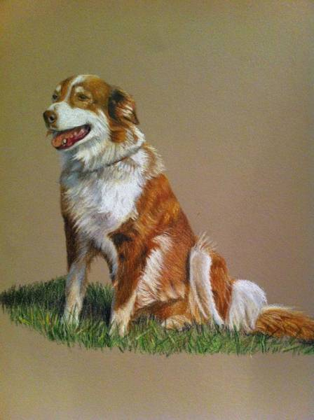 Painting - Aussie by Tammy Taylor