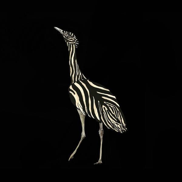 Mixed Media - Australian Bustard Zebra Dressed In Black by Joan Stratton