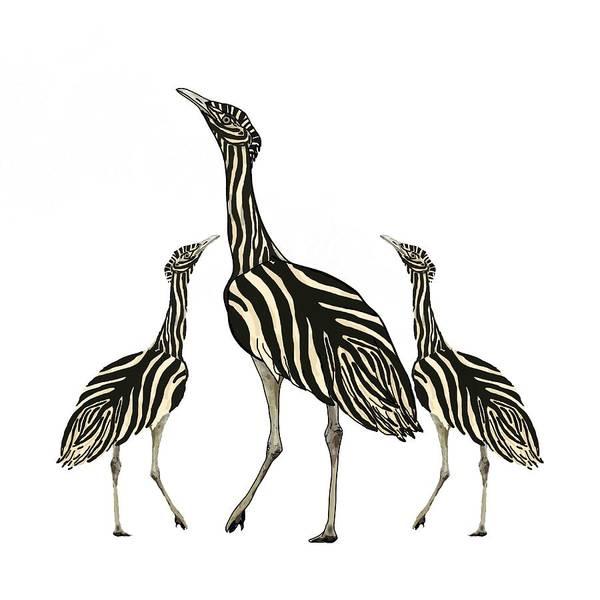 Mixed Media - Zebra Australian Bustards In White by Joan Stratton
