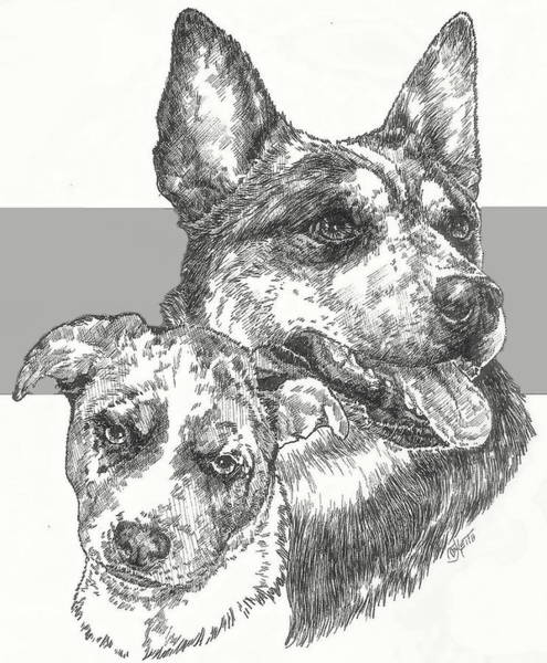 Drawing - Australian Cattle Dog And Pup by Barbara Keith