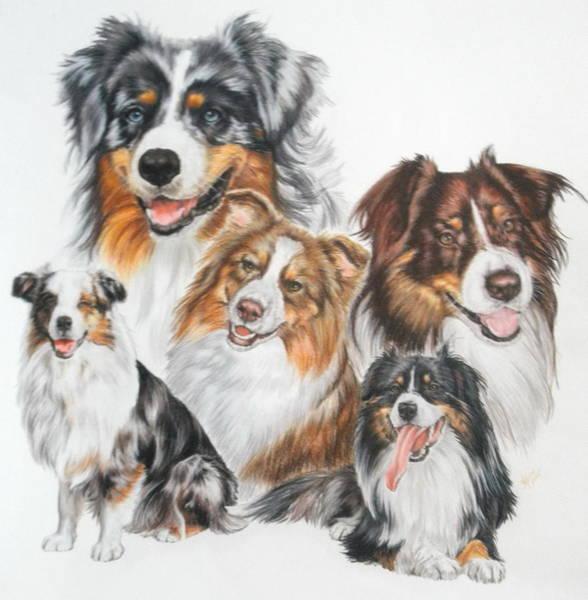 Drawing - Australian Shepherd Dog by Barbara Keith