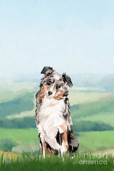 Pedigree Painting - Australian Shepherd by John Edwards