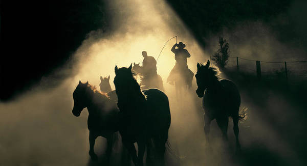 Dust Photograph - Australian Stock Horses Being Mustered by Australian Scenics