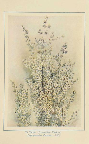 Wall Art - Painting - Australian Wild Flowers 10 by Celestial Images