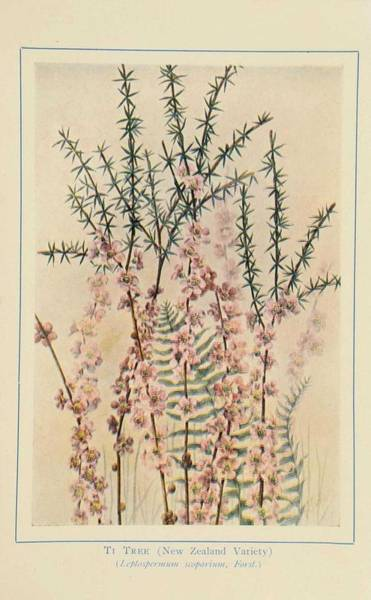 Wall Art - Painting - Australian Wild Flowers 11 by Celestial Images