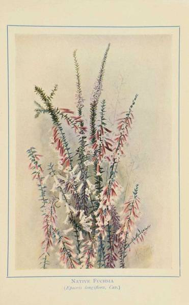 Wall Art - Painting - Australian Wild Flowers 6 by Celestial Images