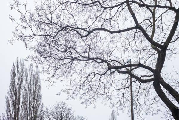 Wall Art - Photograph - Austria, Vienna, Trees In Winter by Walter Bibikow