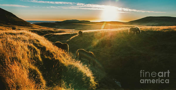 Photograph - Authentic Wild Icelandic Horses In Nature Riding In Golden. by Joaquin Corbalan
