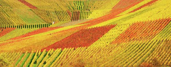 Wall Art - Photograph - Autum Vineyard Panorama by Habub3