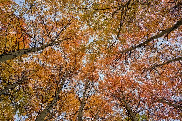 Photograph - Autumn Aloft by TL Mair