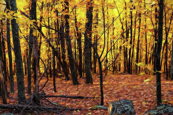 Wall Art - Painting - Autumn Amber Glow Ap by Dan Carmichael