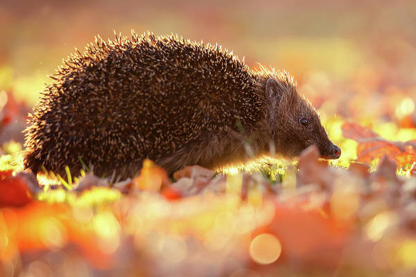 Wall Art - Photograph - Autumn Animal by Roeselien Raimond