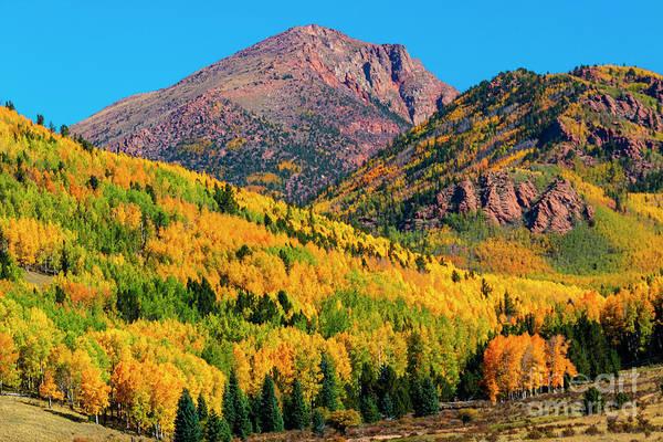 Photograph - Autumn Aspen Leaves Of Pikes Peak by Steve Krull