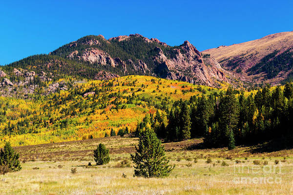 Photograph - Autumn Aspen Leaves Of Victor Colorado by Steve Krull