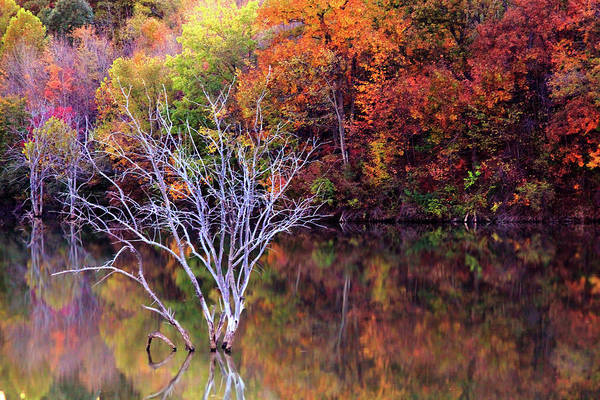 Photograph - Autumn At Alum Creek by Angela Murdock