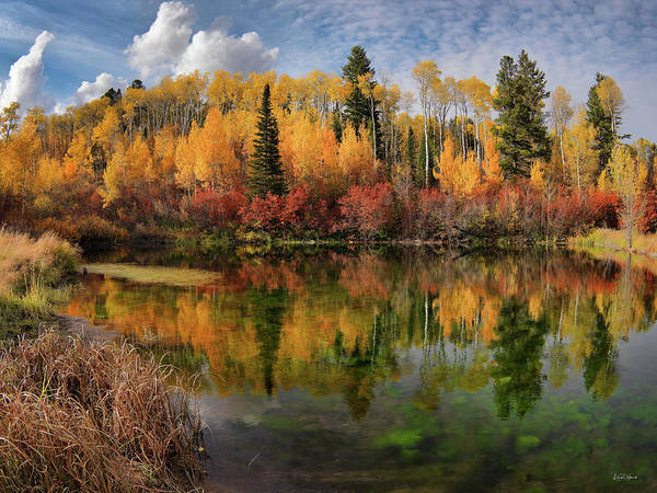 Photograph - Autumn At Its Best by Leland D Howard
