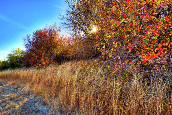 Sliver Photograph - Autumn At Magpie Forest by David Patterson