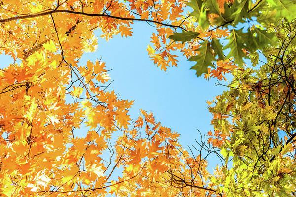 Photograph - Autumn Beauty Iv by Anne Leven