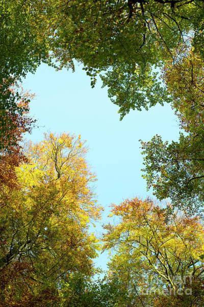 Wall Art - Photograph - Autumn Beech Heart Canopy by Tim Gainey