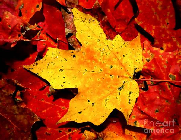 Autumn Beige Yellow Leaf On Red Leaves Art Print