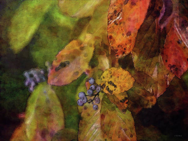 Photograph - Autumn Berries 5719 Idp_2 by Steven Ward