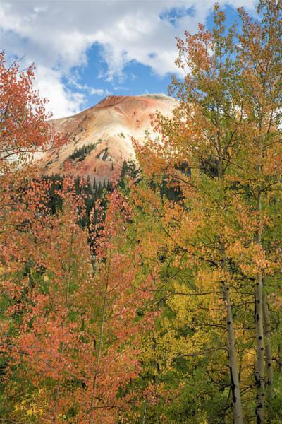 Photograph - Autumn Blend by Denise Bush