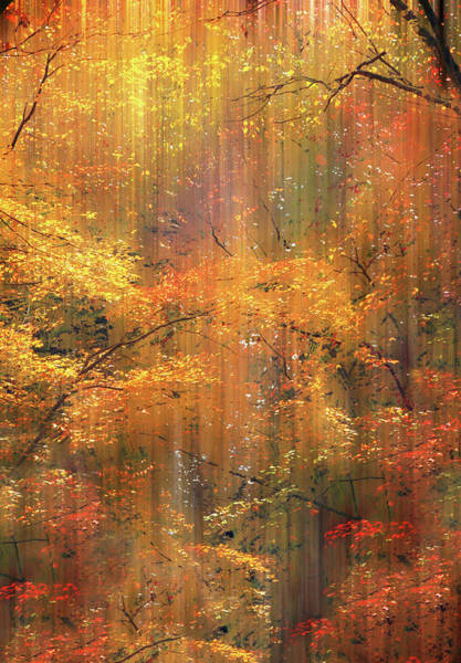 Wall Art - Photograph - Autumn Bling by Jessica Jenney