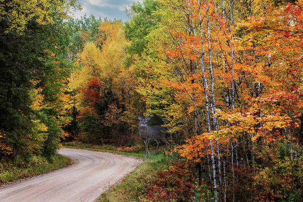 Photograph - Autumn Buck  by Patti Deters