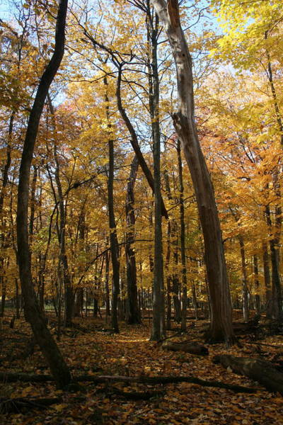 Photograph - Autumn Canopy Fleeting by Dylan Punke