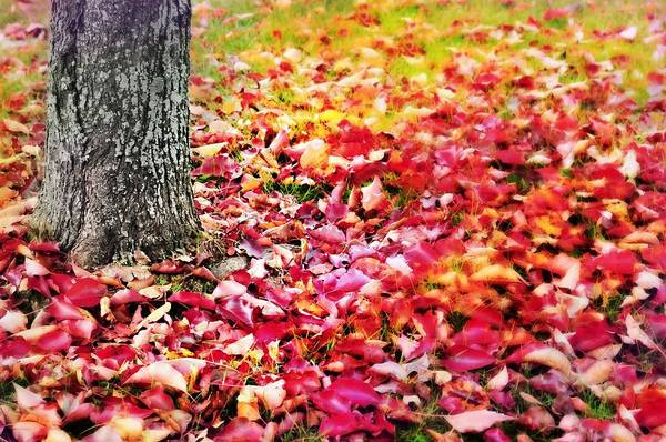 Wall Art - Photograph - Autumn Carpet by Diana Angstadt