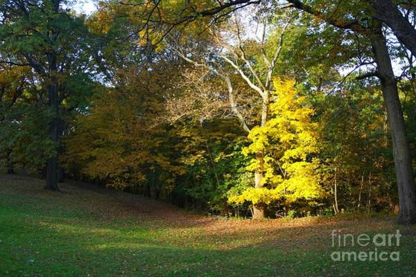 Photograph - Autumn Chosen Tree by Christopher Shellhammer