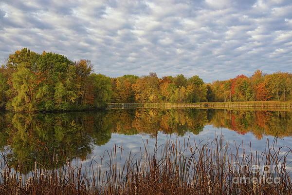 Photograph - Autumn Clarity by Rachel Cohen
