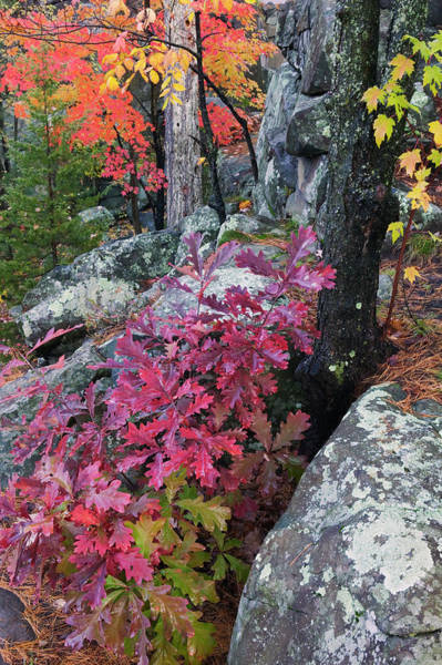 Wall Art - Photograph - Autumn Color Foliage And Boulders by Panoramic Images