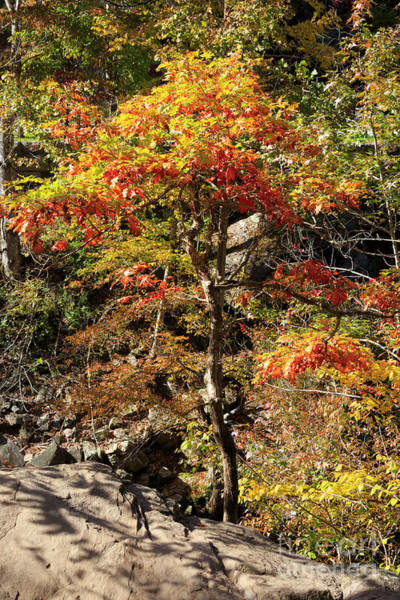 Wall Art - Photograph - Autumn Color In Smoky Mountains National Park by Louise Heusinkveld