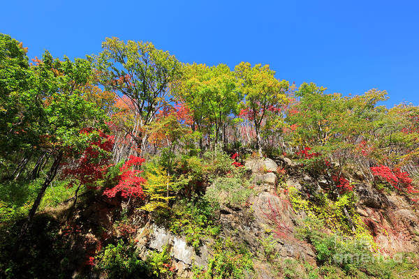 Wall Art - Photograph - Autumn Color On Newfound Gap Road In Smoky Mountains National Park by Louise Heusinkveld