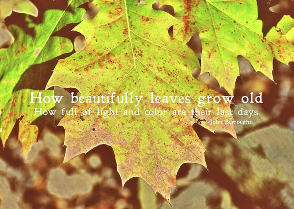 Photograph - Autumn Color Palette Quote by JAMART Photography