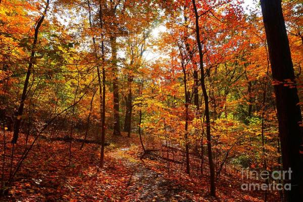 Photograph - Autumn Colorful Forest by Christopher Shellhammer