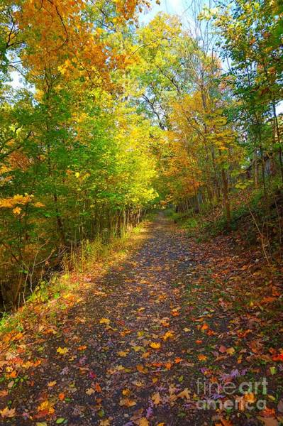 Photograph - Autumn Colorful Trail by Christopher Shellhammer