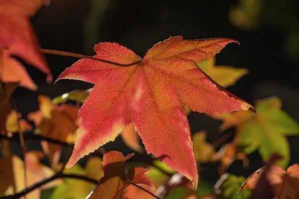 Photograph - Autumn Colors - 1 by Jonathan Hansen