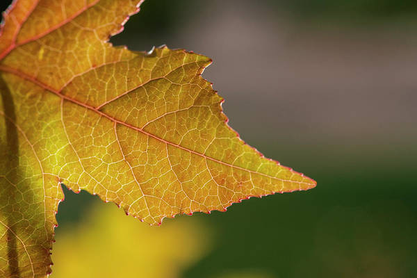 Photograph - Autumn Colors - 3 by Jonathan Hansen