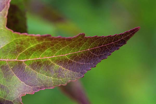 Photograph - Autumn Colors - 4 by Jonathan Hansen