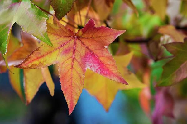 Photograph - Autumn Colors - 5 by Jonathan Hansen