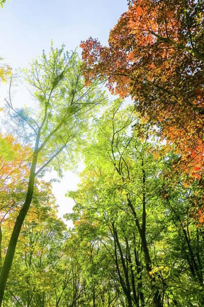 Photograph - Autumn Colors II by Anne Leven
