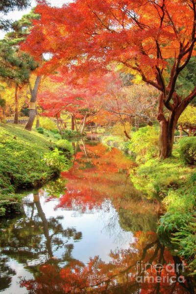 Wall Art - Photograph - Autumn Colors In Japan by Delphimages Photo Creations