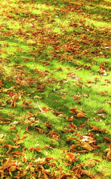 Photograph - Autumn Colors Iv by Anne Leven