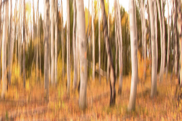Photograph - Autumn Colors by Jennifer Grossnickle