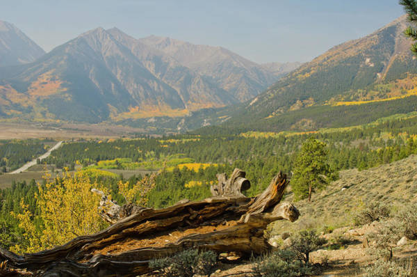 Pine Tree Photograph - Autumn Colors On The Continental Divide by Chapin31